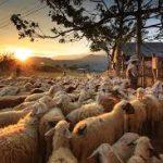 Podpora na začatie podnikateľskej činnosti pre mladých poľnohospodárov