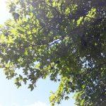 "Projekt AgriGo4Cites podporuje ""gardening"" v mestách"